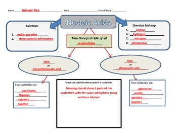Graphic Organizer for Nucleic Acids