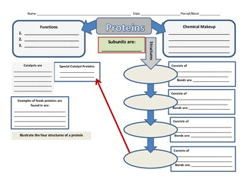 Graphic Organizer for Proteins