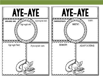 Graphic Organizers : Aye-aye - Oceania Animals : Australia, New Zealand, Madaga