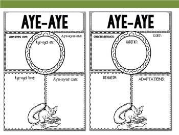 Graphic Organizers Bundle : Aye-aye - Animals : Australia, New Zealand