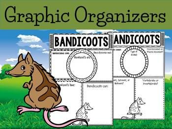 Graphic Organizers Bundle : Bandicoots -  Animals : Australia, New Zealand