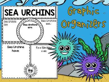 Graphic Organizers Bundle : Sea Urchins : Sea Ocean Animals, Report, Research