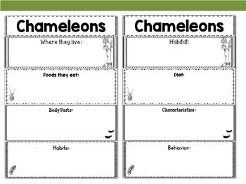 Graphic Organizers: Chameleons - Oceania Animals : Australia, New Zealand