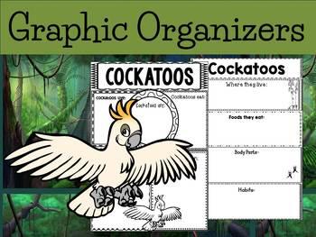 Graphic Organizers Bundle : Cockatoos - Oceania Animals : Australia, New Zealand