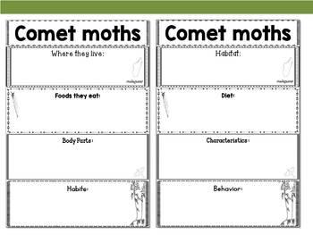 Graphic Organizers Bundle : Comet Moths -  Animals : Australia, Madagascar