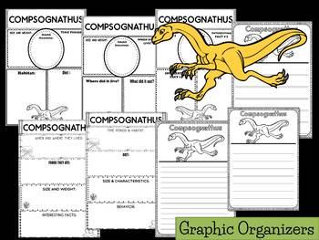 Graphic Organizers: Compsognathus : Dinosaurs