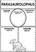 Graphic Organizers Bundle : Dinosaurs : Parasaurolophus