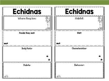 Graphic Organizers: Echidnas - Oceania Animals : Australia, New Guinea