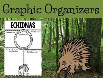 Graphic Organizers Bundle : Echidnas - Oceania Animals : Australia, New Guinea