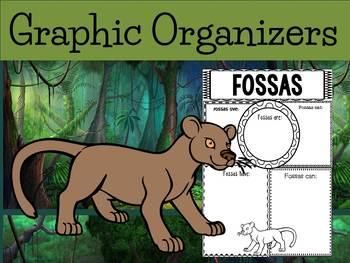 Graphic Organizers Bundle : Fossas / The Fossa - Oceania Animals : Madagascar