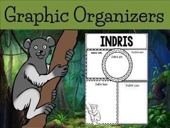 Graphic Organizers Bundle : Indri Lemur - Animals : Madagascar, Australia