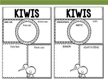 Graphic Organizers Bundle : Kiwis, Kiwi Bird - Oceania Animals :New Zealand