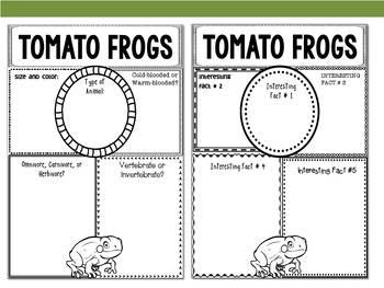 Graphic Organizers: Tomato Frogs : Madagascar, Australia, Etc.