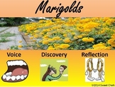 Extensive Use of Textual Evidence & Graphic Organizers for Marigolds