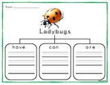 Graphic Organizers for Insect Writing