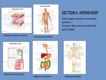Biology Graphic Organizer Bundle- Cells, Photosynthesis, 6 Kingdoms, Human Body