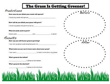 Grass Growing Experiment