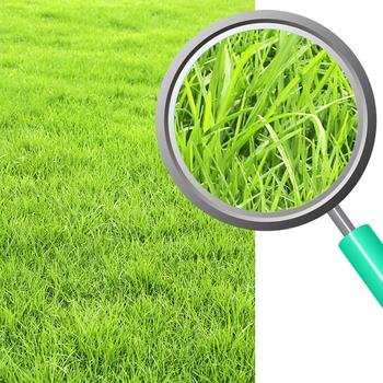 Grass Photos / Photograph Clip Art Set for Commercial Use