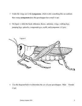 Grasshopper Dissection