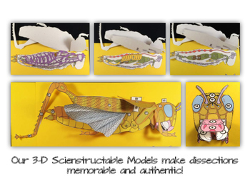 Grasshopper Paper Dissection - Scienstructable 3D Dissection Model