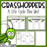 Grasshopper Life Cycle