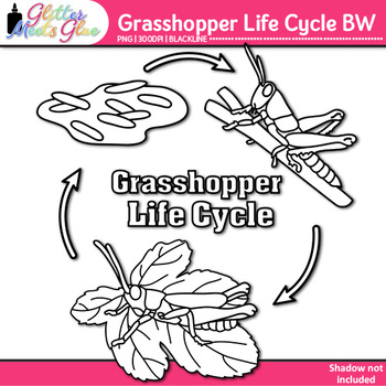 Grasshopper Life Cycle Clip Art | Great for Animal Groups & Insect Resources B&W