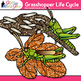 Grasshopper Life Cycle Clip Art {Great for Animal Groups & Insect Resources}