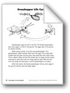 Grasshopper Life Cycle/El ciclo de vida del saltamontes