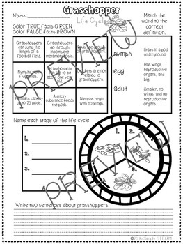 Grasshopper Life Cycle NO PREP Mini - Book and Worksheet