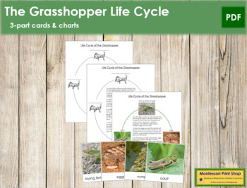 Grasshopper Life Cycle Nomenclature Cards and Charts