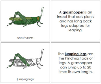 Grasshopper Nomenclature Book