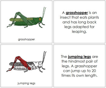 Grasshopper Nomenclature Book (Red)
