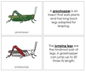 Grasshopper Nomenclature Book (Red)