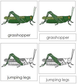 Grasshopper Nomenclature Cards
