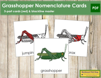 Grasshopper Nomenclature Cards (Red)