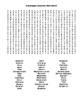 Grasshopper Dissection Word Search