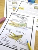 Grasshoppers Differentiated Reading Passages with Vocabulary & Comprehension