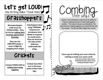 Grasshoppers! {Fun and facts about grasshoppers,crickets, katydids + weta}