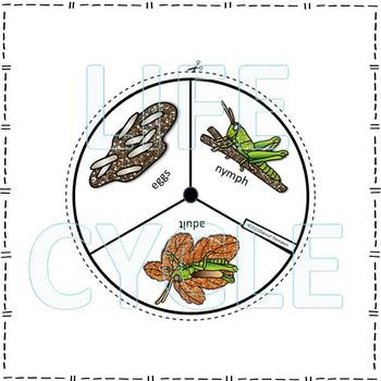 Grasshoppers and Crickets Life Cycle Spinner Bundle