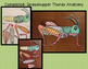 Grasshoppers and Locusts minibook on adaptations and life