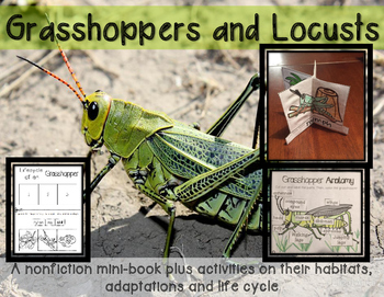 Grasshoppers and Locusts minibook on adaptations and life cycle with CRAFTIVITY