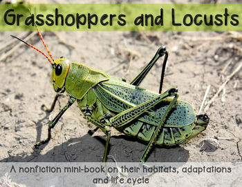 Grasshoppers and Locusts minibook on adaptations, habitats