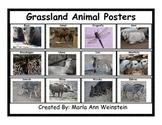 Grassland Animal Posters