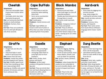 Grassland Animals Trading Card Activities and Posters