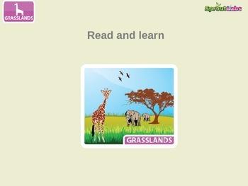Grasslands Ecosystem