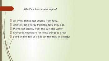 Grasslands Food Chain