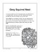 Gray Squirrel Nest