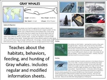 Gray Whales - Mini Unit