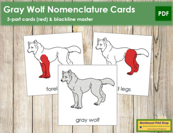 Gray Wolf Nomenclature Cards (Red)