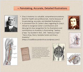 gray henry anatomy